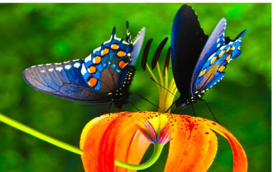 Nice Wallpapers Colorful | PixelsTalk.Net