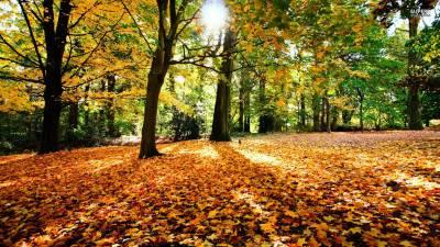 Road Autumn Wallpapers HD | PixelsTalk.Net