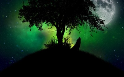 Wolf Backgrounds free download | PixelsTalk.Net