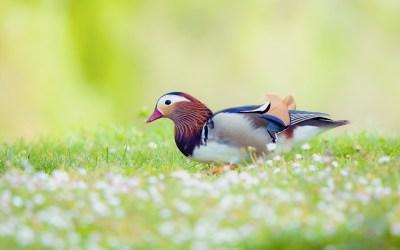 Birds Backgrounds free download | PixelsTalk.Net