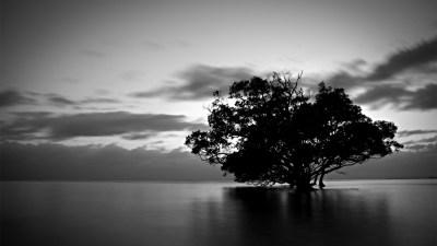 Tree Wallpaper Black And White   PixelsTalk.Net