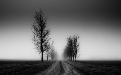 Tree Wallpaper Black And White | PixelsTalk.Net
