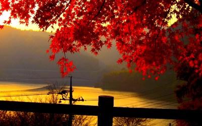 Fall Backgrounds Free Download | PixelsTalk.Net