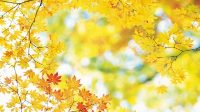 Free HD Fall Wallpapers make your screen shine brighter | PixelsTalk.Net