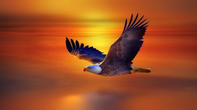 Eagle Wallpapers Free Download   PixelsTalk.Net