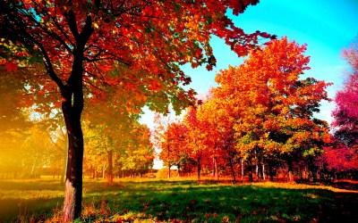 Fall Wallpapers HD   PixelsTalk.Net