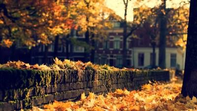 Free HD Fall Wallpapers | PixelsTalk.Net
