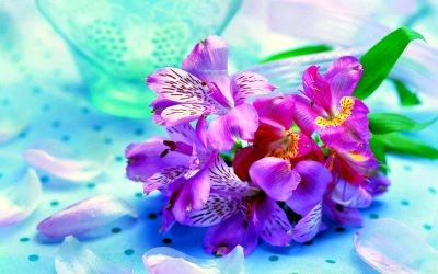 Flower Wallpaper High Resolution | PixelsTalk.Net