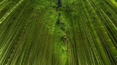 Free HD Bamboo Wallpapers | PixelsTalk.Net