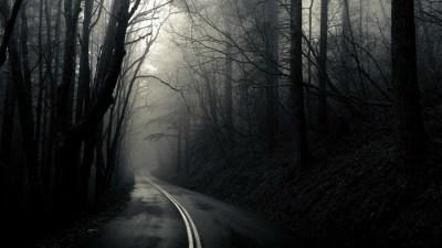 HD Dark Woods Backgrounds   PixelsTalk.Net
