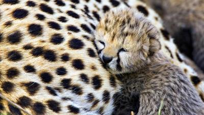 Free Download Cute Baby Animal Wallpapers | PixelsTalk.Net