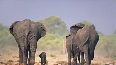 Desktop Elephant HD Wallpapers | PixelsTalk.Net