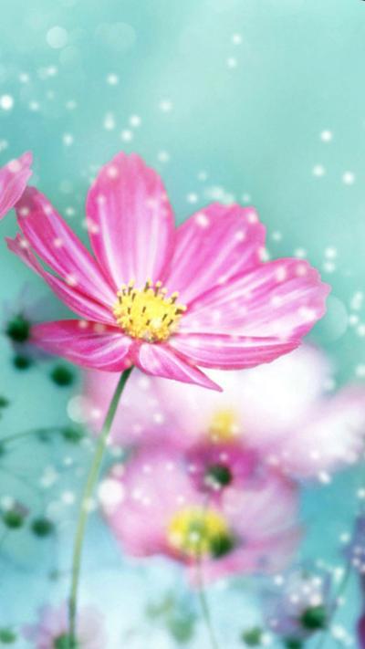 Flower iPhone Wallpapers | PixelsTalk.Net