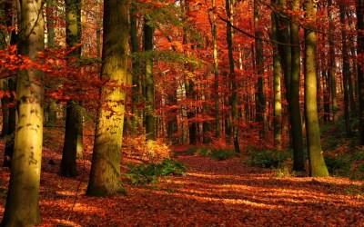 Autumn Forest Wallpaper for Desktop | PixelsTalk.Net