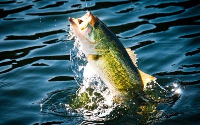 Bass Fishing Wallpaper HD | PixelsTalk.Net