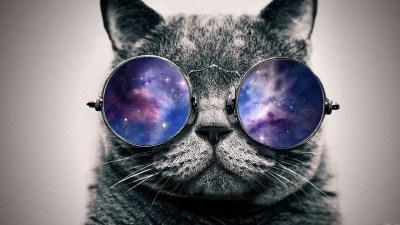 Cat Wallpaper Tumblr | PixelsTalk.Net