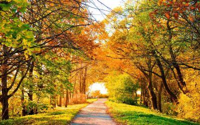 Aspen Tree Wallpapers HD   PixelsTalk.Net