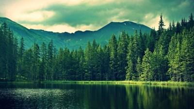 Forest Backgrounds HD Free Download | PixelsTalk.Net