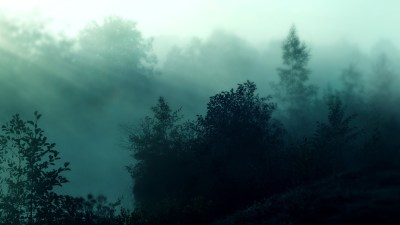 Foggy Forest Wallpapers HD | PixelsTalk.Net