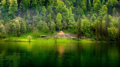 Forest Backgrounds For Home Free Download | PixelsTalk.Net