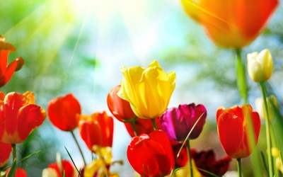 Spring background free download | PixelsTalk.Net