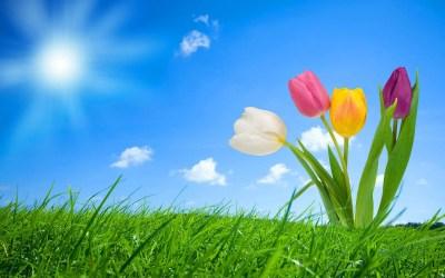 Spring Wallpapers HD download free | PixelsTalk.Net