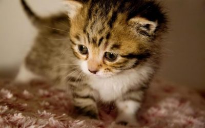 Cute Baby Animal Wallpapers | PixelsTalk.Net