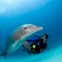 The Dolphin Experience at UNEXSO, the Underwater Explorer's Society, Freeport, Grand Bahama.    Dolphin trainer Veronica Cuccurullo Scuba diver Cristina Zenato