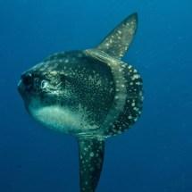 Diving-in-Nusa-Lembongan-Indonesia