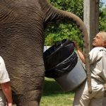 elephantshit