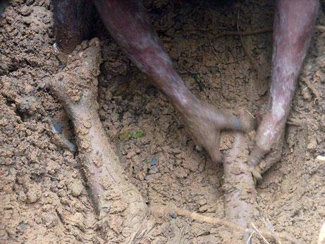 mudslide-big