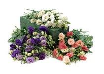 Lisianthus, la rosa japonesa 1