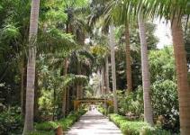 Jardín Botánico Aswan, Egipto