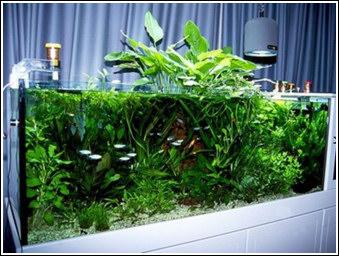 Plantas acuáticas de acuarios