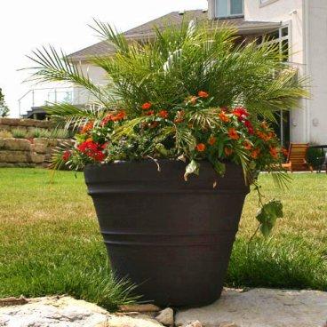 Una maceta con varias plantas
