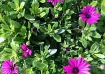 Primera feria de plantas y jardinería