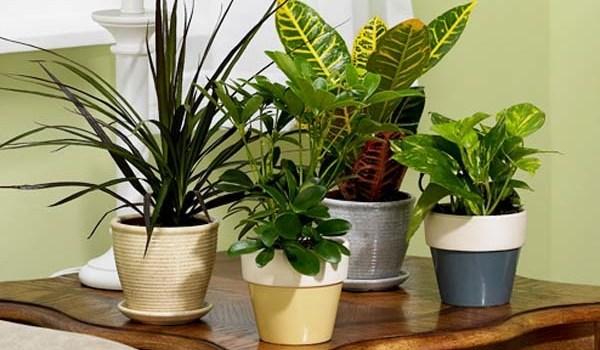 Plantas decorativas para el hogar
