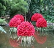 plantas-acuaticas