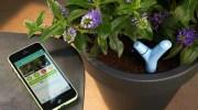 Flower Power, controla la vida de tu planta