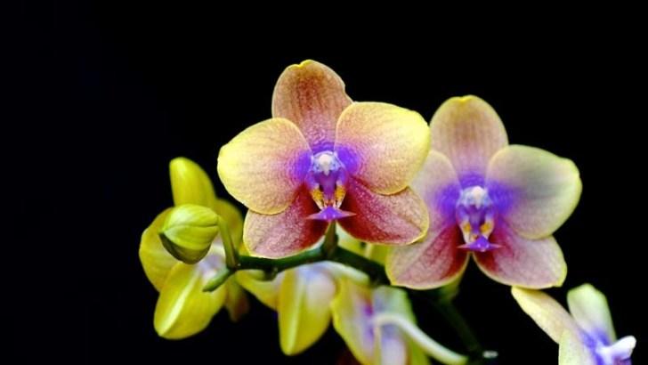 Curiosidades sobre las orquídeas