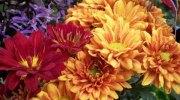 Flores y plantas que florecen en otoño e invierno