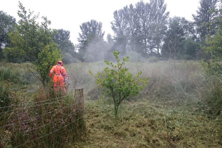 Cutting the habitat area