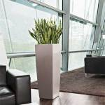 Snake Plant in Lechuza Cubico Alto Taupe