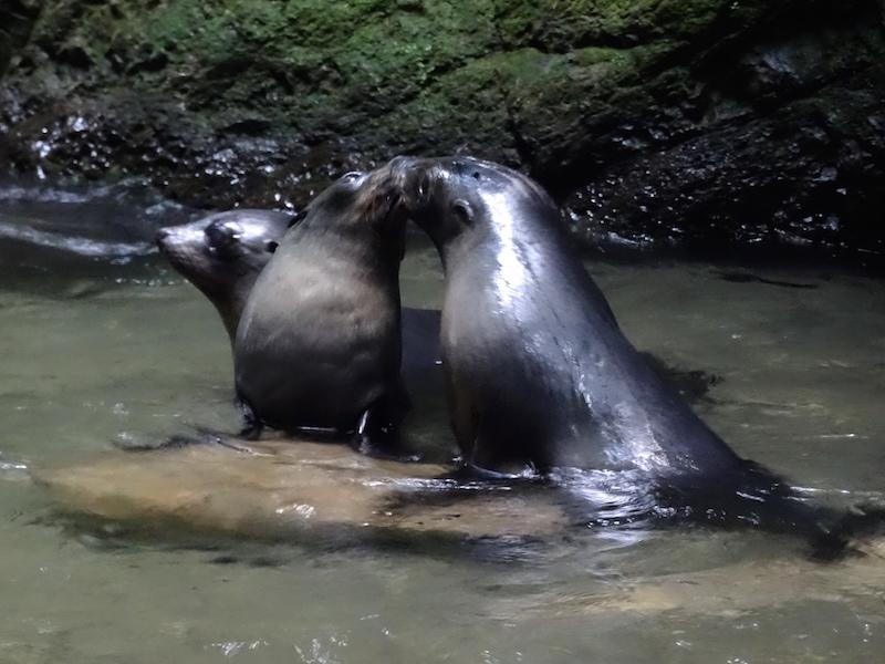 ©playingtheworld-nouvelle-zelande-kaikoura-dauphin-voyage-23