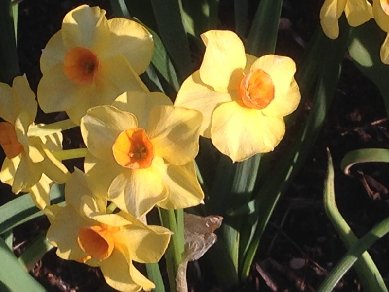 Spring can remind us that there is hope for a good harvest