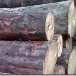 What Is Softwood ?