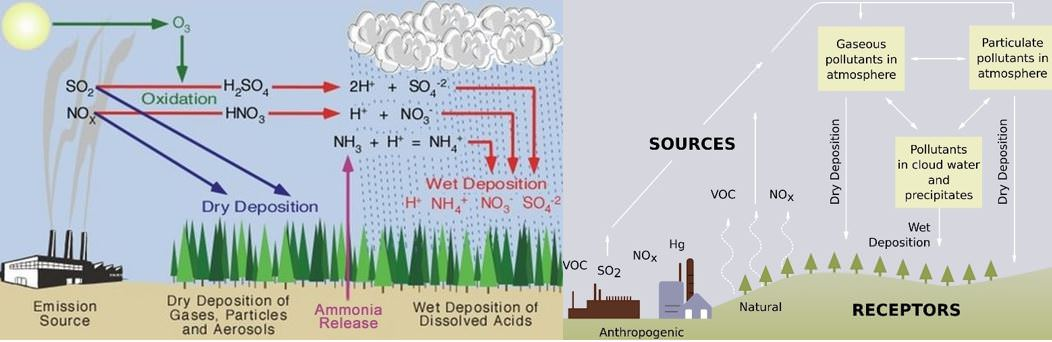 the effects of acid rain on organisms in aquatic bioemes Effects of acid rain – surface waters and aquatic animals the ecological effects of acid rain are most clearly seen in the aquatic, or water, environments, such as streams, lakes, and.