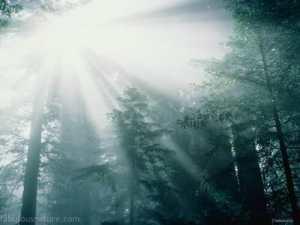 let-the-light-shine-through