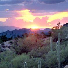 desert sun, phoenix, az, mountains and cacuts