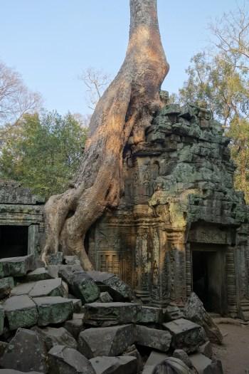 ta prohm tomb raider temple best top